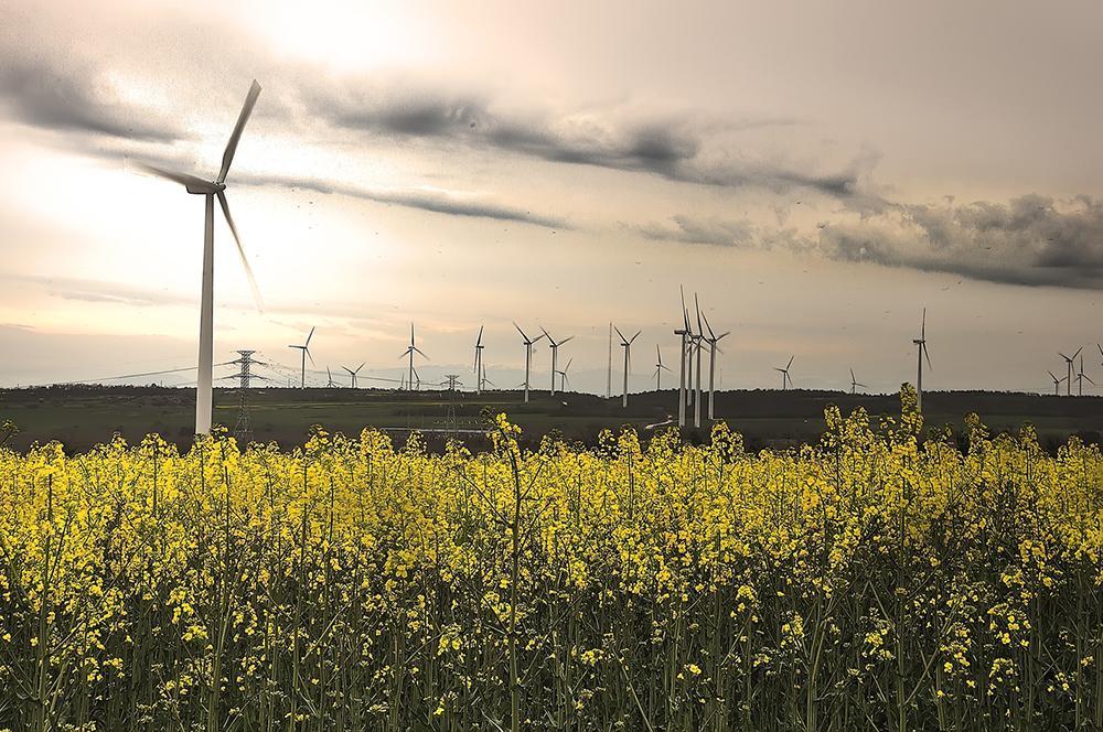 El sector eólico valora los resultados de la subasta para el otorgamiento del Régimen Económico de Energías Renovables como un avance que permite áreas de mejora